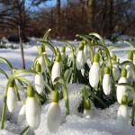 Весна пришла - готовимся к новому сезону