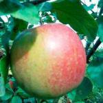 Яблоня Иедзену